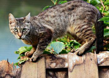 marineros gatitos