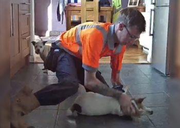 Hombre salva a su perro de ahogarse