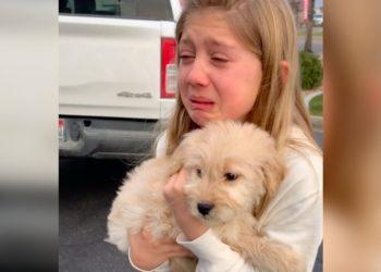 niña adoptar perrito