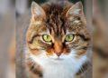 Una gatita se convierte en Jefa de policía