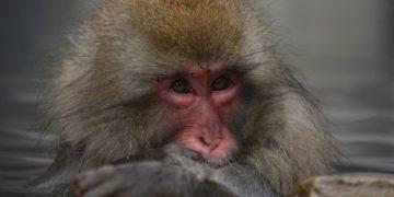 Mono roba celular en TikTok