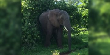 elefante turistas