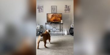 Reacción de perro y gato a El Rey León